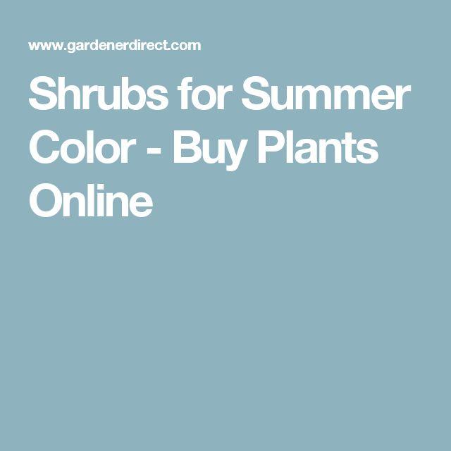 Shrubs for Summer Color - Buy Plants Online