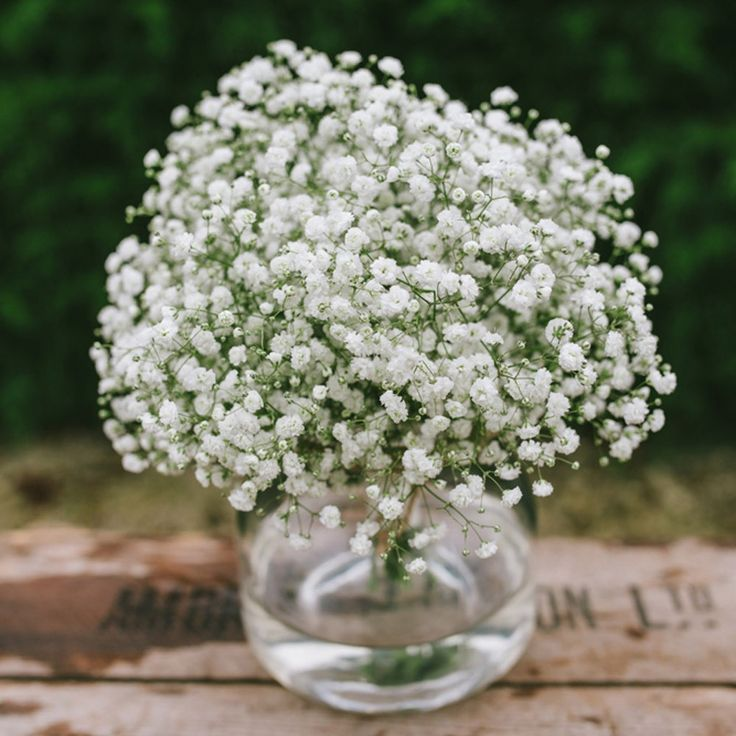 Gypsophila - wedding bouquet