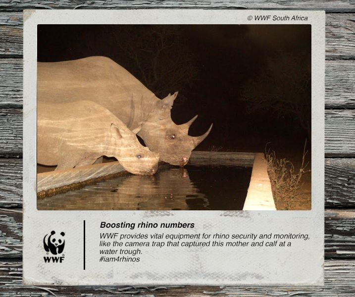 WWF provides vital equipment for rhino security and monitoring, like the camera trap that captured this mother and calf at a water trough. #iam4rhinos