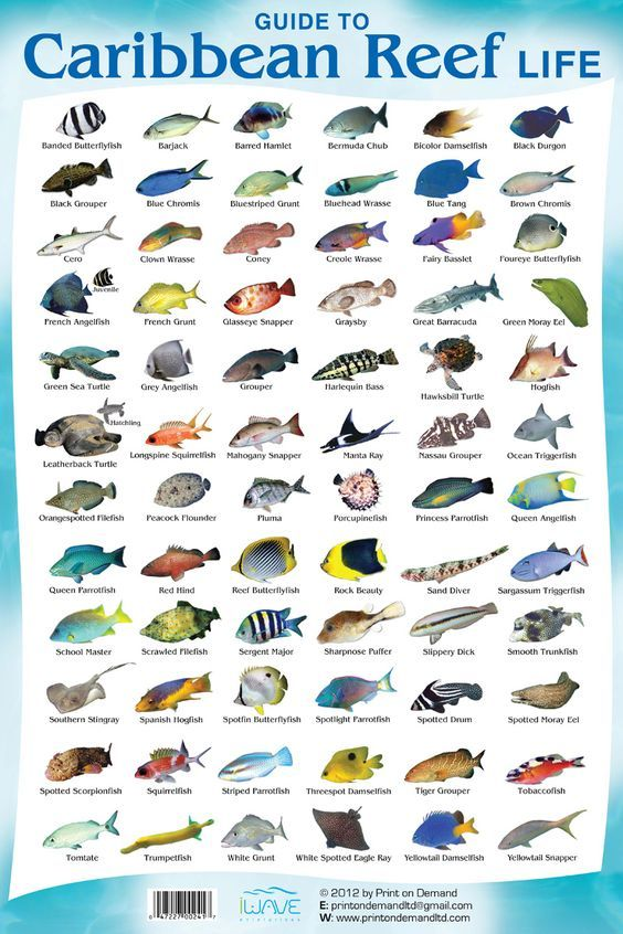 This Is A C Reef Fish Species Chart So You Know What Cancun