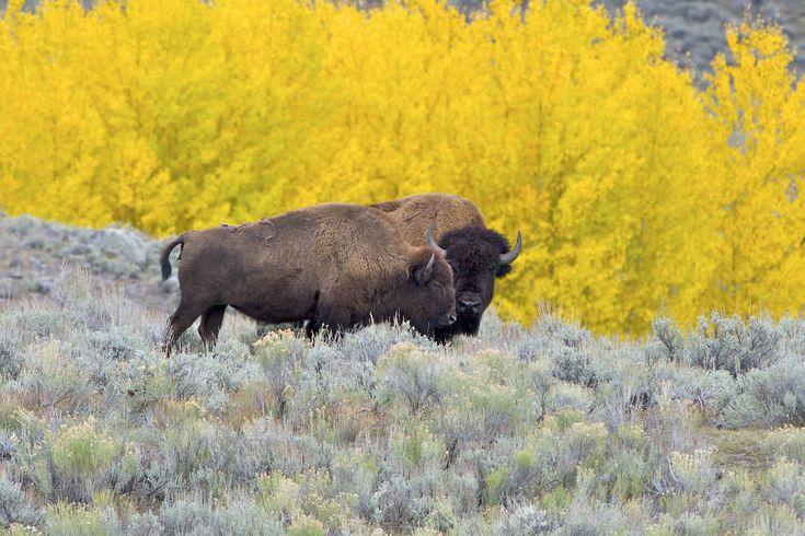 12++ Animal control buffalo ny ideas