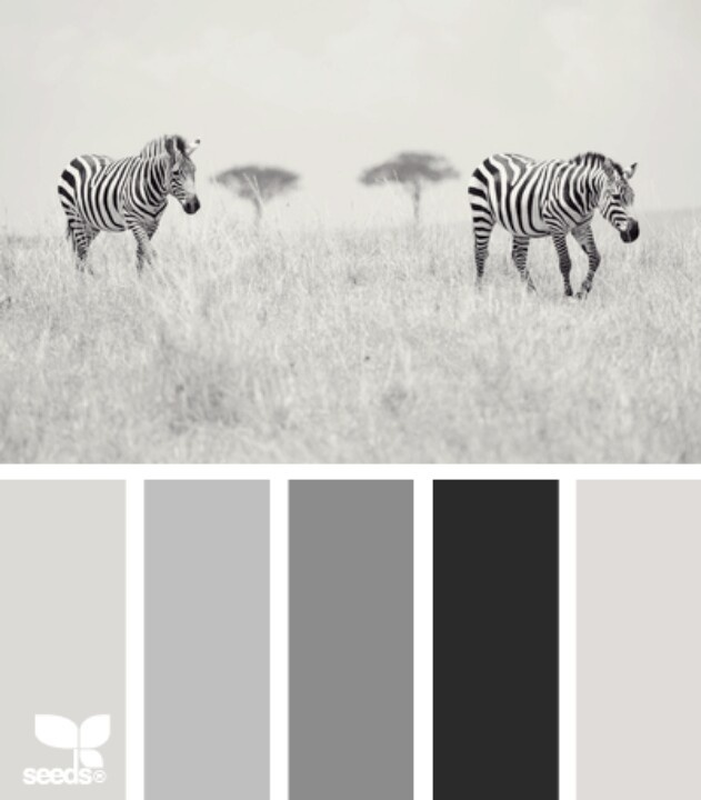 Achromatic Color Scheme Decorating Pinterest Neutral