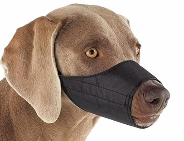 SOUND: https://www.ruspeach.com/en/news/14046/     Намордник - это приспособление, надеваемое на морду животных для того, чтобы они не кусались. Намордник ограничивает открытие пасти, не позволяет животному кусать. В комбинации с ошейником и поводком намордник обеспечивает достаточный контроль за собаками опасных пород. Намордники также используются для лошадей, верблюдов и ослов, а также для медведей в цирках.      The muzzle is a device which is put on a animals mouth in or