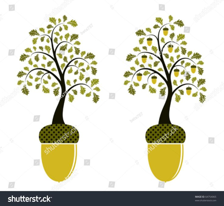 2 versions of oak tree growing from acorn  | Vector Two Versions Oak Growing Acorn Stock Vector ...