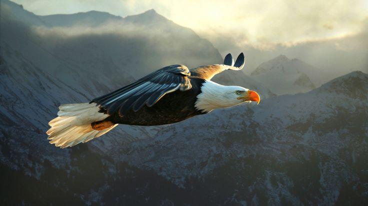 В возрасте 40 лет когти орла становятся слишком длинными и гибкими и он не может схватить ими добычу. Его клюв становится слишком длинным и изогнутым и не позволяет ему есть. Перья на крыльях и груди становятся слишком густыми и тяжелыми и мешают летать. Теперь орел стоит перед выбором: либо смерть, либо длительный и болезненный период изменения, длящийся 150 дней…  Он летит в свое гнездо, находящееся на вершине горы и там долго бьется клювом о скалу, пока клюв не разобьется и слезет… Потом…