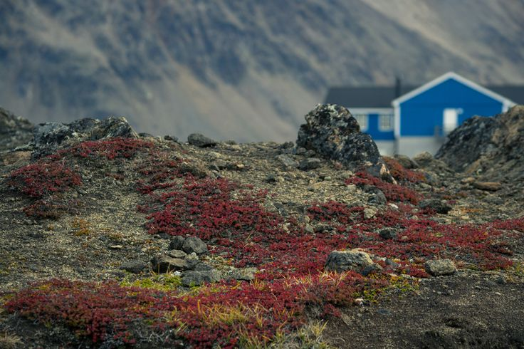 The Colour of Your Harmonies -The amazing vibrance of Greenland, accompanied by a short poem, by Luke Barker at www.tronorphic.com.
