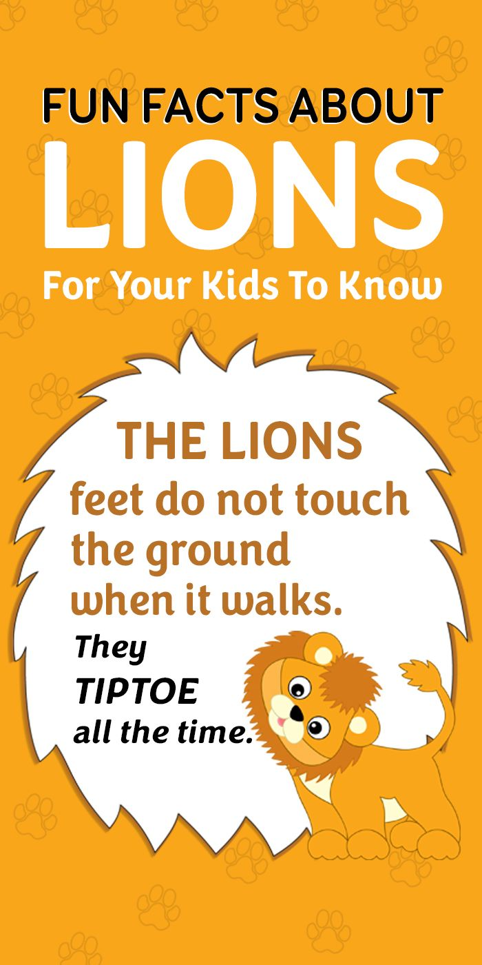 Fun Facts About Lions For Your Kids To Know
