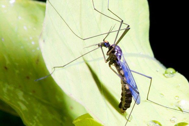 Conheça remédios naturais para aliviar picadas de insetos