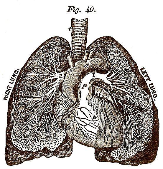 die besten 17 ideen zu anatomie zeichnung auf pinterest