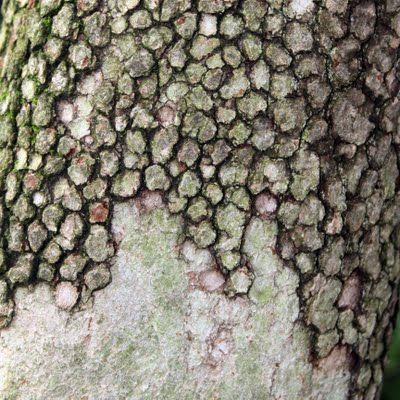 Tree bark #photography