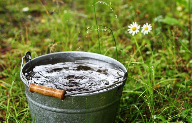 How to use grey water in the garden: Collecting grey water using buckets and containers is a low-maintenance way to reuse your water, but it requires a good bit of labor