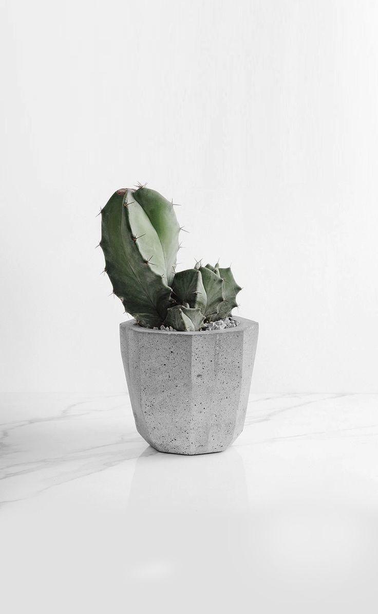Best 25+ Concrete planters ideas on Pinterest