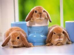 Resultado de imagen de imagenes de conejos bebes
