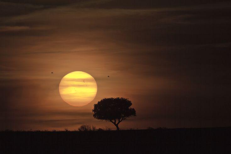 Sunspot Group 1429 - Merida, Spain (via #spinpicks)