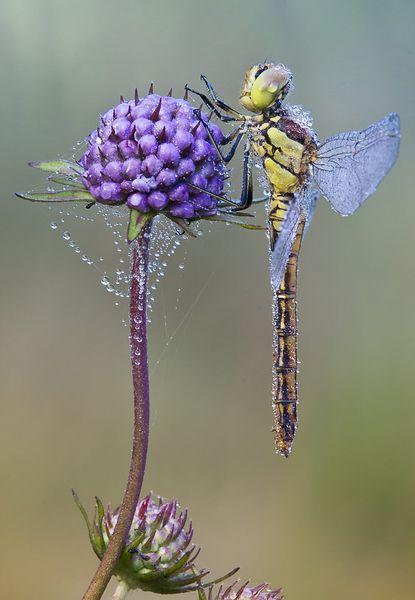 Fantastični insekti - Page 7 E0f5e8b045bd5d8516b842d47b90156e