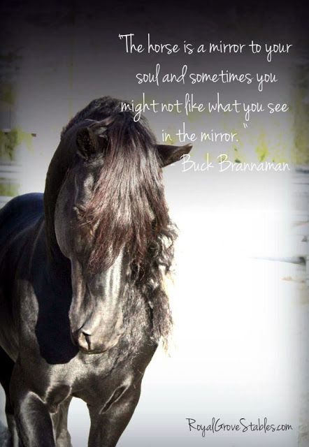 Buck Brannaman said this to one of hie clients at a clinic. The horse was so crazy that they had to put him down. Sometimes, we really don't like what we see in the mirror.