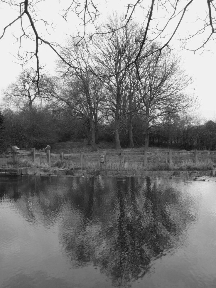 Tree's reification in the canal Walsall I've put the original photo up to taken by ginge on the 20/2/17