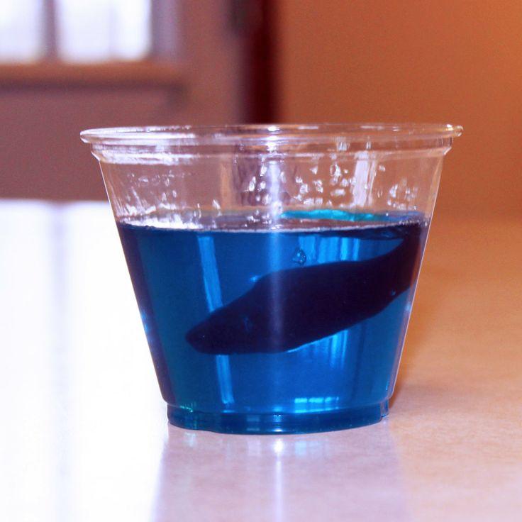 Un bol d'océan ... jello bleu et poisson en gelée