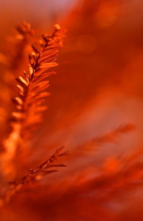 Les 25 meilleures id es concernant couleurs de mariage - Mariage couleur orange ...