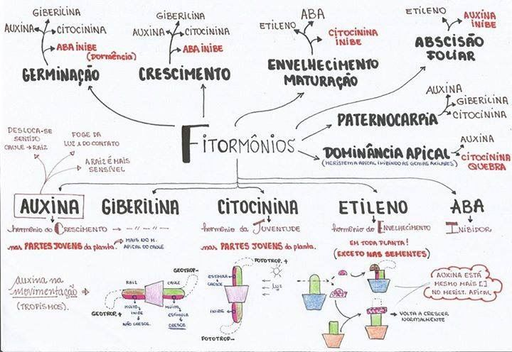 31 best biologia resumos dicas e macetes images on pinterest find this pin and more on biologia resumos dicas e macetes by ingrid walsh ccuart Choice Image