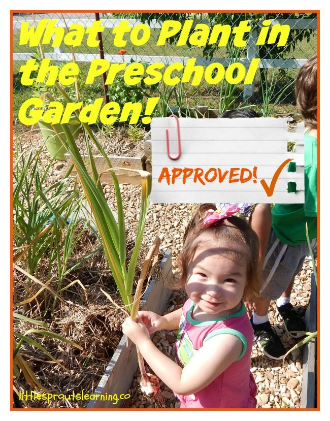 What to plant with your preschoolers!
