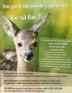 Cine nu știe desenul animat cu Bambi? Ei, bine, in realitate se pare ca e mai bine sa nu salvam puii de caprioara daca, prin excursii sau plimbari dam de vreunul: