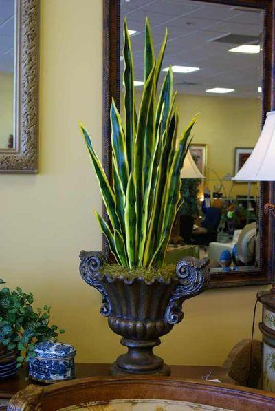 mother-in-law's tongue...easy indoor plant   HOME::GARDEN ...