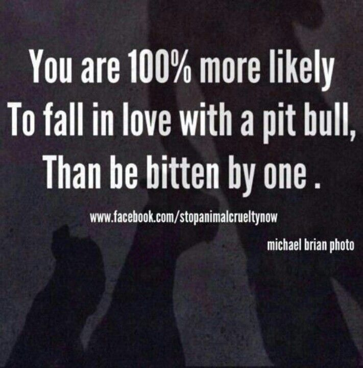 Pit bulls - much maligned breed which doesn't deserve its terrible repututation, but rather deserves GOOD homes, good training, and lotsa love.