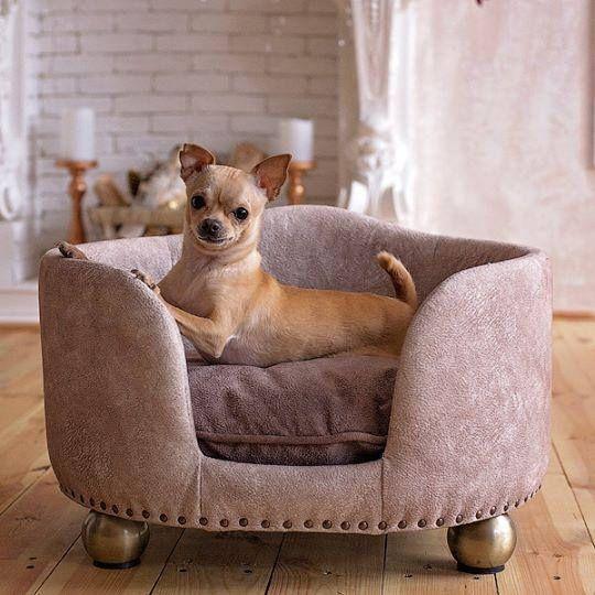 Pet Bed Dog Bed Designer Cat Beds Dog Bed Grey Pet Furniture