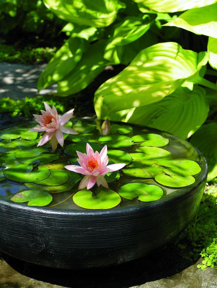 les 25 meilleures id es concernant plantes aquatiques sur pinterest plantes aquatiques. Black Bedroom Furniture Sets. Home Design Ideas