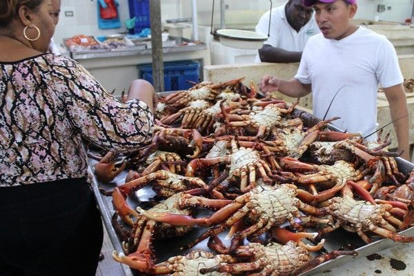1000 images about panama on pinterest panama canal for City fish market
