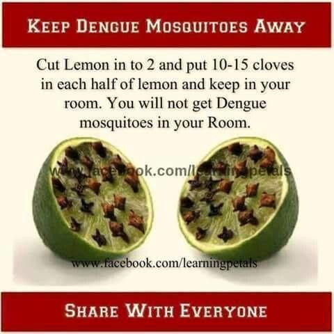 Keep Dengue mosquitoes away