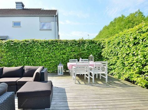 Welche Pflanzen als Sichtschutz für Garten und Terrasse? \u2013 Tipps und