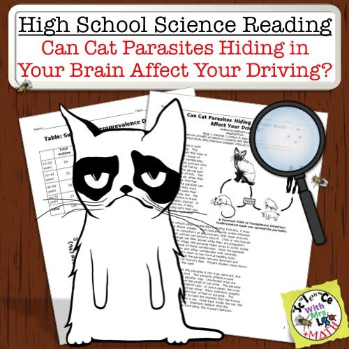 Can Cat Parasites Hiding In Your Brain Affect Your Driving