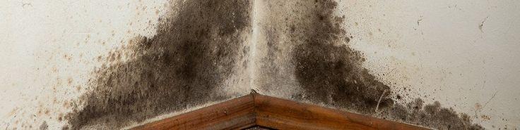 Soluzioni per la muffa sulle pareti di casa