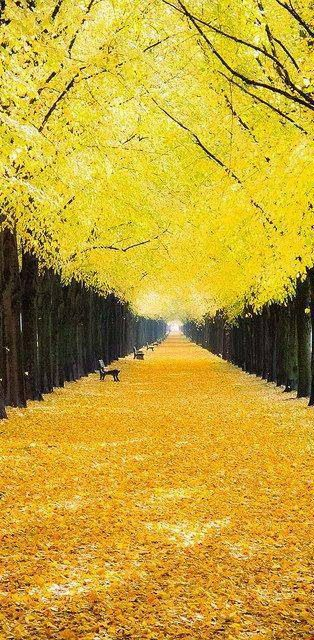 Autumn Trees, Georgengarten, Hannover, Germany