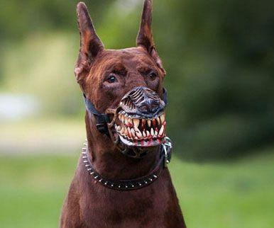 Werewolf Dog Muzzle Dog Muzzle Scary Dogs Corso Dog