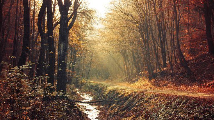https://flic.kr/p/pHA7zh | Red Forest pt.I. | www.realitydream.hu