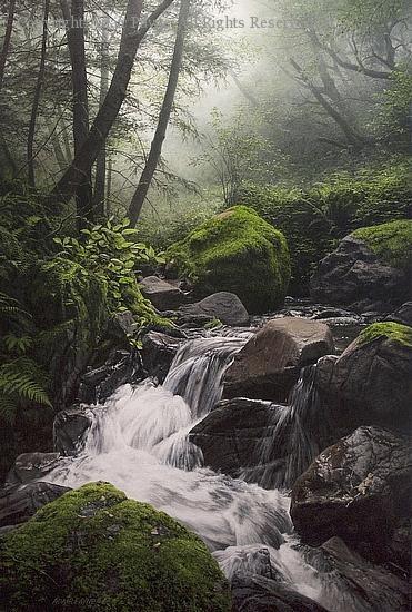 Webb Creek - Oil by Adair Payne