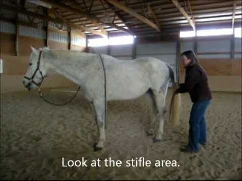 Activating a horse's stifle area - YouTube