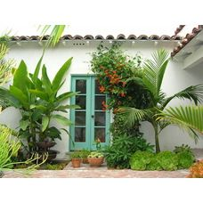 Palms, banana tree, succulents create wow factor in narrow planter