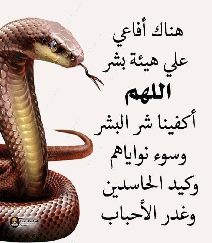Pin By غاليه On Arabic Quotes Arabic Quotes Quotes