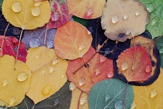 Colors of Fall (40 pieces)Image copyright: From Internet, Artist Unknown
