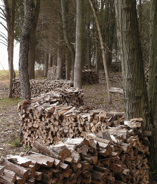 woodpiles among trees by chiptape on Flickr. -★-