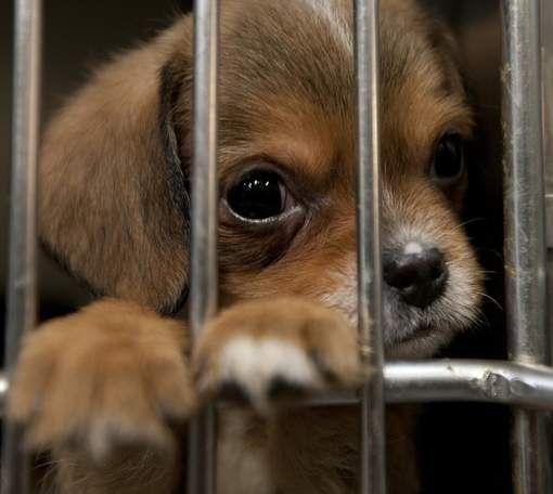 Vijf mythes over honden uit het asiel ontkracht - HLN.be