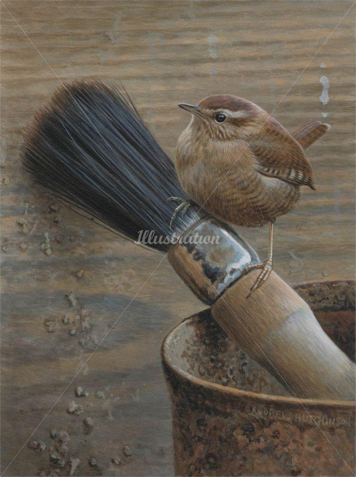 Andrew Hutchinson Illustration Portfolio - Wildlife and Countryside Illustration and Painting Artist