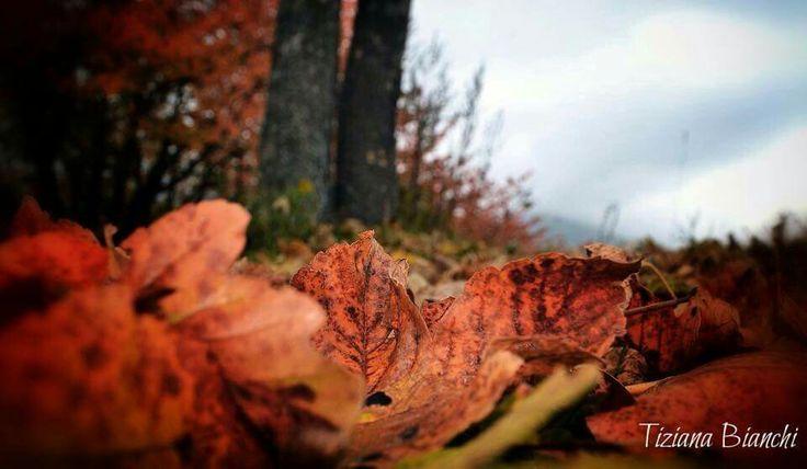 Scorci d'autunno