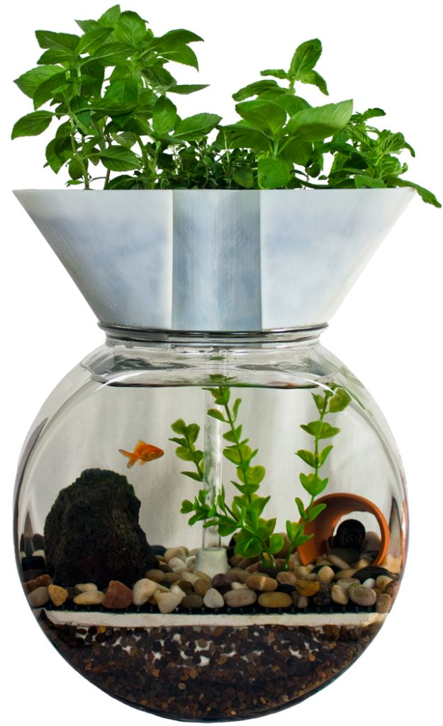 36 best images about paludarium on pinterest bonsai for Hydroponic fish tank diy