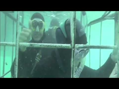 Shark cage diving inCape Town...  @funholidays @capetown #travel #diving