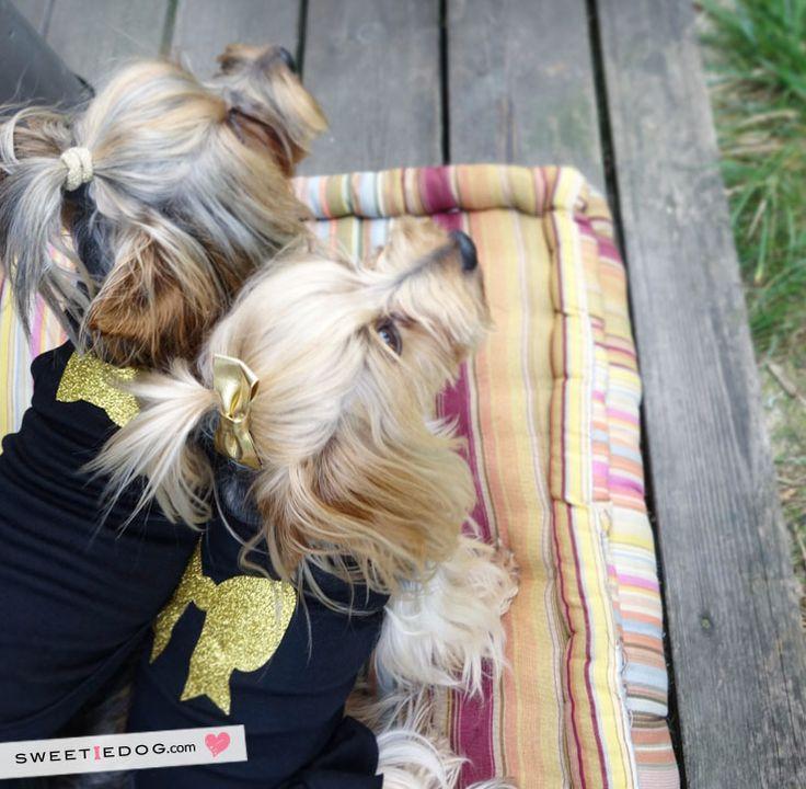 Karl Dog Tshirt www.sweetiedog.com #yorkie #yorkshire #dog #dress #dogclothe #ribbon #karl #bow #bowtie